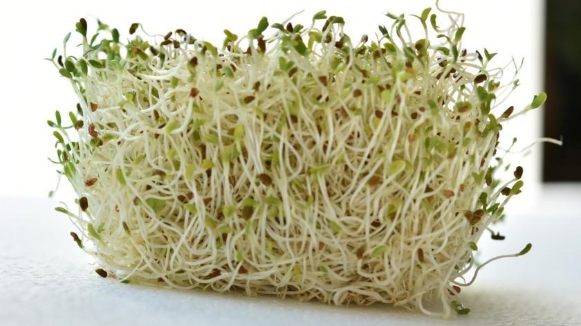 La alfalfa es una planta considerada buena fuente de vitaminas y minerales.(Pixabay)