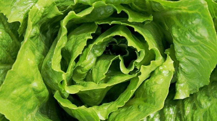 La clorofila, además de aportar energíacontiene muchas propiedadesbenéficas para la salud.(Pixabay.)