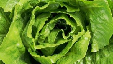 La clorofila, además de aportar energíacontiene muchas propiedadesbenéficas para la salud.